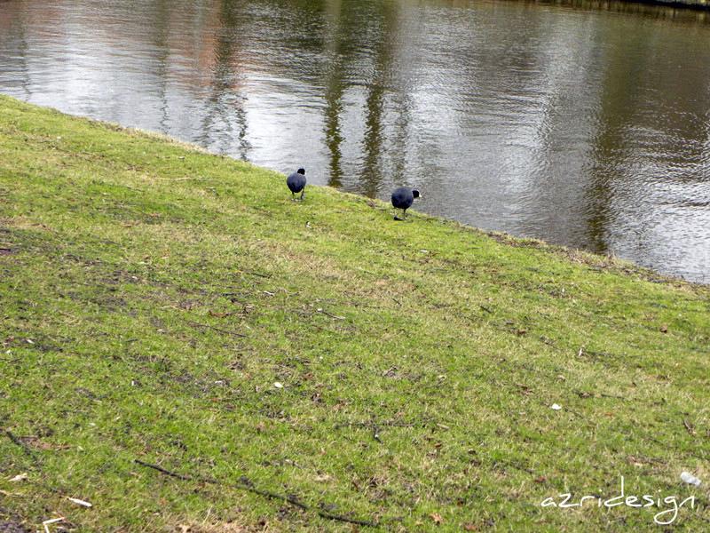 Ducks, Rijswijk, Netherlands, 2010