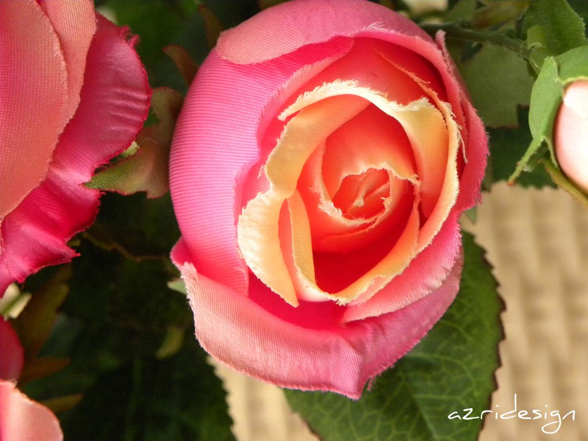 Pink orange flower