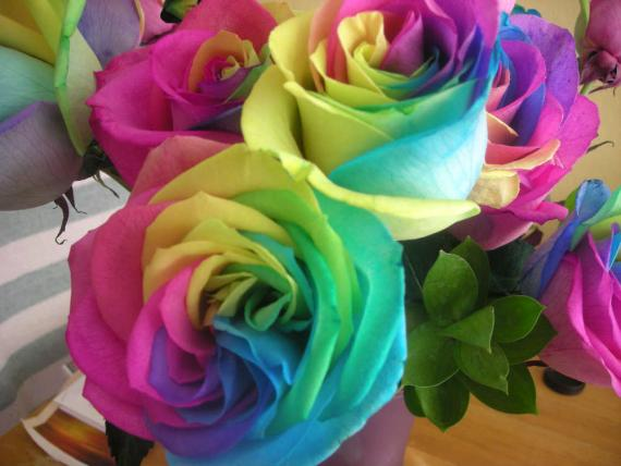 Natural Rainbow Roses - Colorful Flowers