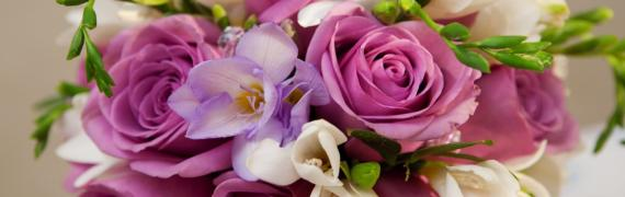 Purple Roses, just love them...