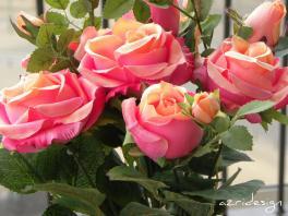 Pink orange bunch of flowers